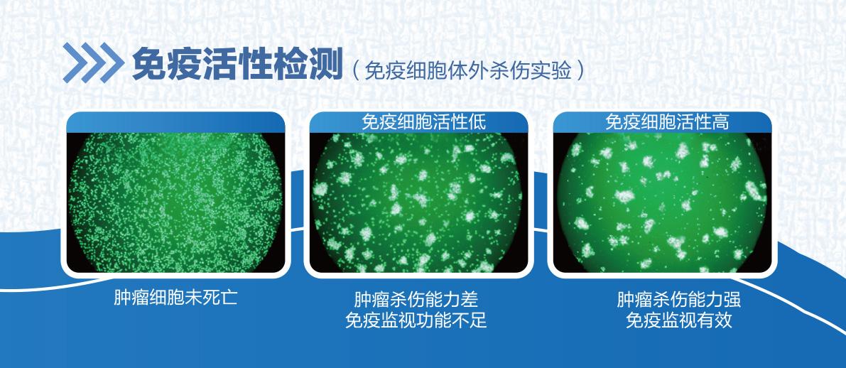 免疫活性检测.jpg插图(2)